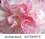 blurred abstract pink... | Shutterstock . vector #637269073