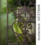vase and iron gate with moss
