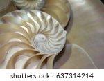 nautilus shell symmetry... | Shutterstock . vector #637314214