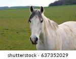 Stock photo head horse 637352029