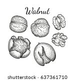 walnuts set. ink sketch of nuts.... | Shutterstock .eps vector #637361710