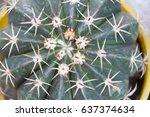 top view cactus  | Shutterstock . vector #637374634