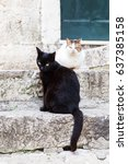 a couple of domestic cats seen... | Shutterstock . vector #637385158