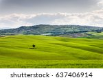 lonely tree at tuscany  italy | Shutterstock . vector #637406914