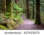 trail through forest at lewis... | Shutterstock . vector #637425073