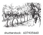 rows of vineyard grape plants... | Shutterstock .eps vector #637435660