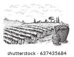 rows of vineyard grape plants... | Shutterstock .eps vector #637435684