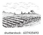 rows of vineyard grape plants... | Shutterstock .eps vector #637435693