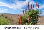 Beautiful Red And Green Aloe...