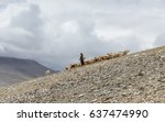 the shepherd drives the goats... | Shutterstock . vector #637474990
