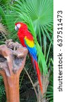 ara parrot with red  yellow and ... | Shutterstock . vector #637511473