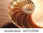 nautilus shell symmetry...   Shutterstock . vector #637515334