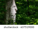 old man in the tree.  natural... | Shutterstock . vector #637519000