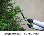 cutting hedges using gardening... | Shutterstock . vector #637537954