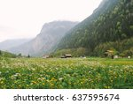field of wild flowers in... | Shutterstock . vector #637595674
