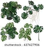 indoor plants set vector. leaf... | Shutterstock .eps vector #637627906