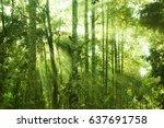 fantastic tropical jungle view... | Shutterstock . vector #637691758
