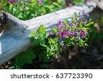 Spring  Purple Blue Flowers Of...