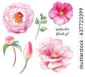 watercolor peony  wild flowers... | Shutterstock . vector #637723399