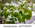 cold spring 2017 in belarus ... | Shutterstock . vector #637735594