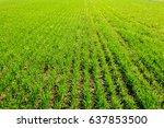 spring green field | Shutterstock . vector #637853500