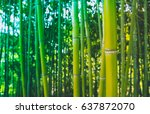 Beautiful Bamboo Green Fresh...