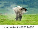 Elephants   Serengeti Natural...
