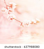 blossoming of the apricot tree... | Shutterstock . vector #637988080