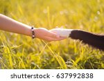 dog paw and human hand ... | Shutterstock . vector #637992838