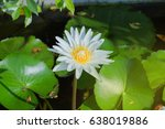 close up. the lotus has many... | Shutterstock . vector #638019886