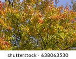 fall leaves detail | Shutterstock . vector #638063530