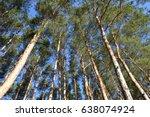 High Pine And Blue Sky  Bottom...