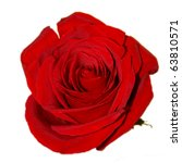 Stock photo red rose on the white background isolated 63810571