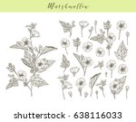 vector hand drawn medicinal ... | Shutterstock .eps vector #638116033