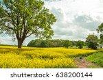 canola fields in the summertime. | Shutterstock . vector #638200144