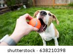 Young Dog Playing With Orange...