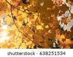 autumn yellow maple leaves with ... | Shutterstock . vector #638251534