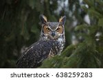 a close up of a great horned... | Shutterstock . vector #638259283