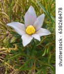 Small photo of Flower Amiss Grass