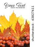 autumn leaves.beautiful... | Shutterstock . vector #63827611