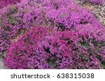 spring field of wild lilac... | Shutterstock . vector #638315038