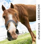 Stock photo young horse s head close up curious animal horse s head funny horse 638334244