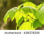 fresh green leaves and sunlight ... | Shutterstock . vector #638378200