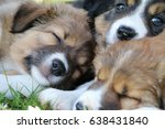 sleeping border collie puppy   Shutterstock . vector #638431840