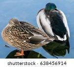 Shy Ducks
