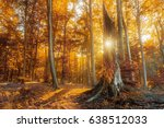 sun peaking through a tree bark. | Shutterstock . vector #638512033