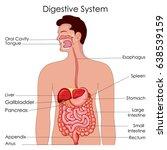 medical education chart of... | Shutterstock .eps vector #638539159