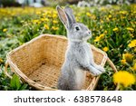 Gray Rabbit In The Garden In...