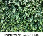 palm leaf | Shutterstock . vector #638611438