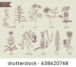 number 4 medical herbs vector... | Shutterstock .eps vector #638620768